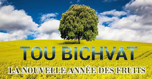 Tou Bichvat : l'abondance d'Erets Israël
