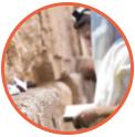 Nos rabanims prient pour vous à Jerusalem | Tsidkat Eliaou