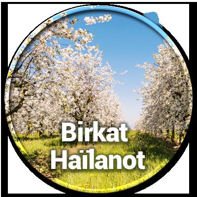 Birkat Haïlanot Bénédiction sur les arbres | Tsidkat Eliaou